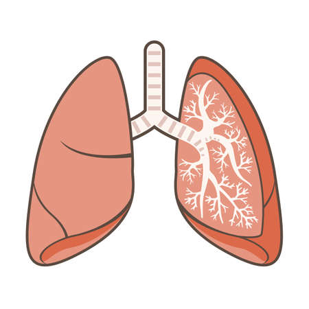 cray: Illustration of Lungs Illustration