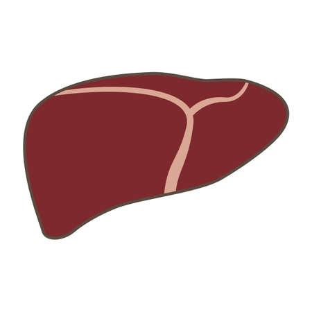 gallbladder surgery: Illustration of Liver Illustration