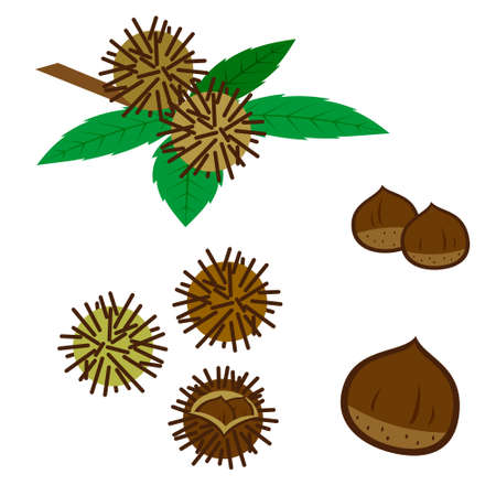 Kastanien Und Blätter Auf Weißem Hintergrund Lizenzfrei Nutzbare