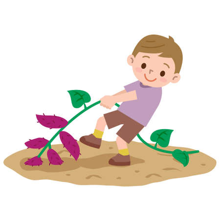 Boy to a sweet potato digging