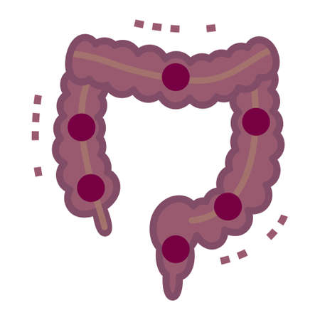 rectum: Illustration of large intestine