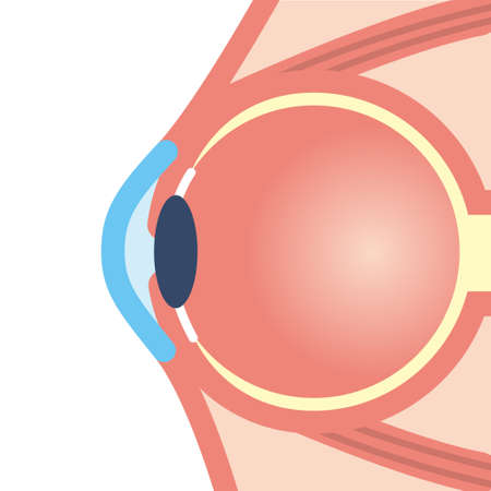 Illustration of the eyeball Illustration