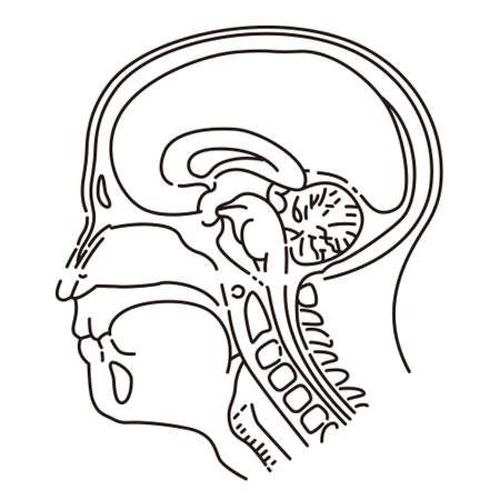 illustration de la tête de l & # 39 ; Vecteurs