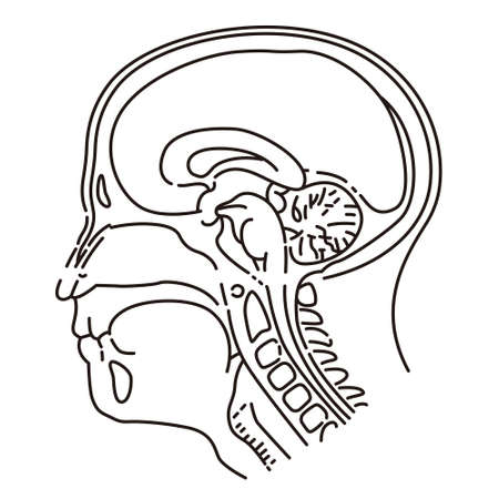 Head illustration of MRI examination Illustration