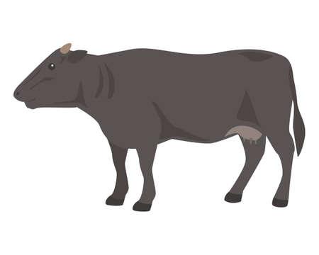 Black cow on white background.Wagyu – Japanese shorthorn. Çizim