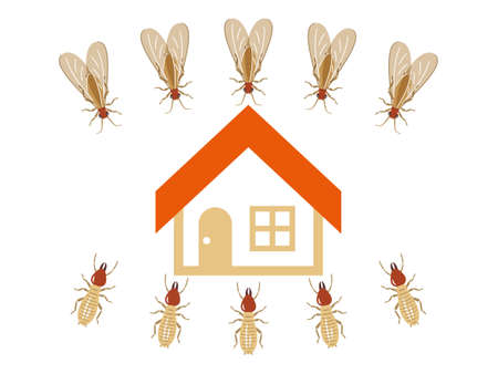 House targeted by a horde of termites Vector Illustration