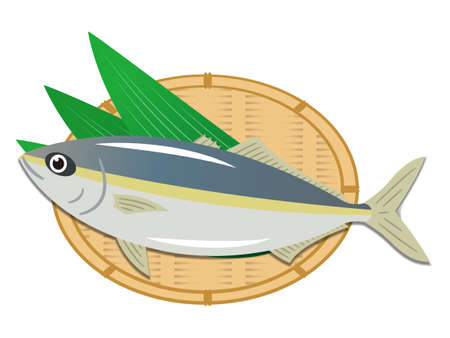 Simple yellowtail illustration on white background 일러스트
