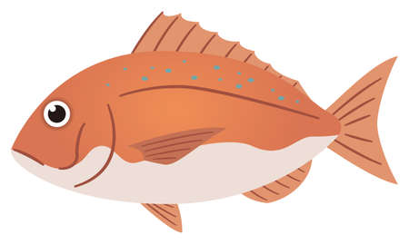 Illustration of a simple sea bream on a white background