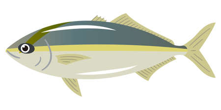 Illustration of amberjack on a white background
