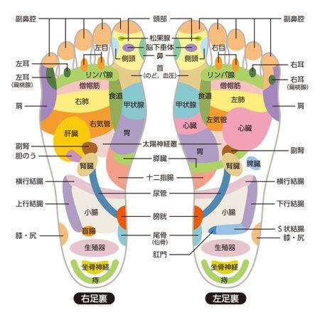 Reflexology foot massage points reflexology zones, massage signs and colored points Vektoros illusztráció
