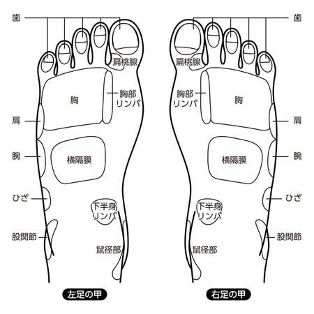 Reflexology foot massage points reflexology zones, massage signs and colored points