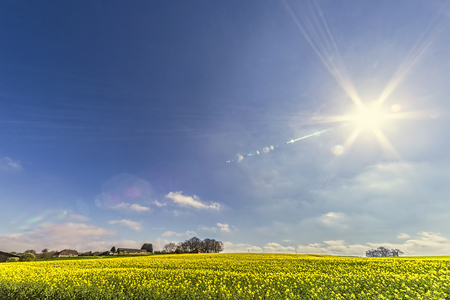 輝く日の下の菜種畑と丘