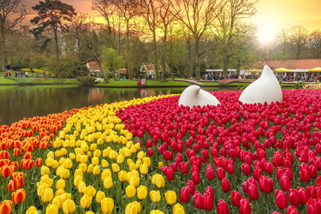 Sunrise on the beautiful Keukenhof garden in Lisse city Stock Photo