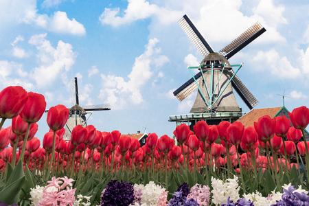 Iconisch toeristisch en pittoresk bloemen Nederlands landschap elk jaar van maart tot mei overal in het land Stockfoto