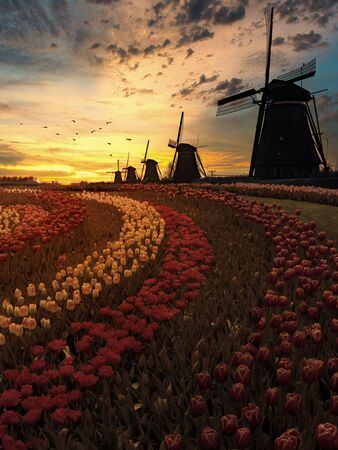 Colorful Dutch tulip farm nested to a majestic windmill under a sunny spring weather Imagens