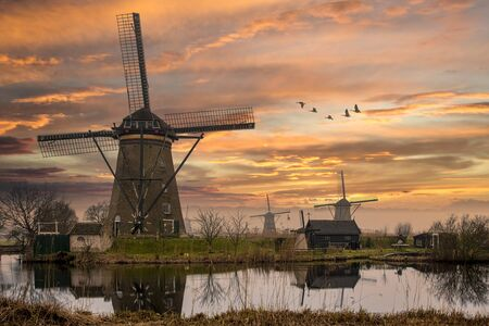 Group of geese flying above the Dutch windmills during the sunset moment