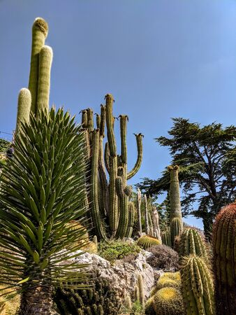 Daylight summer scene shot on Jardin botanique dÈze, showing the huge cactus diversity in different forms, sizes and lengths.