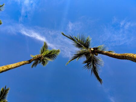 Two palm trees seen from below with a blue sky background