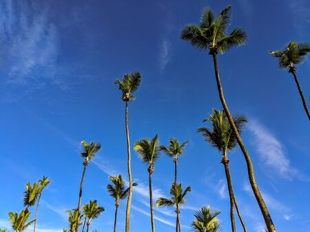 Group of palm trees on a bright blue sky background in Seychelles.