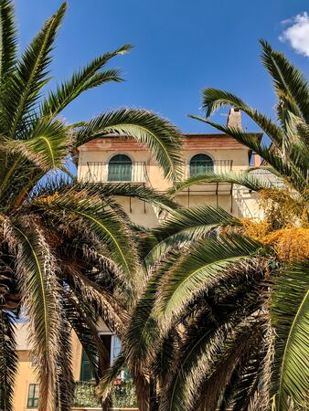 Beautiful Italian House with small windows and green shutters hidden by two large palm trees