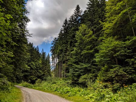 Forest road among green trees in Bucegi Mountains Reservation, Romania