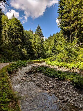 River landscape among green trees in Bucegi Mountains Reservation, Romania 스톡 콘텐츠