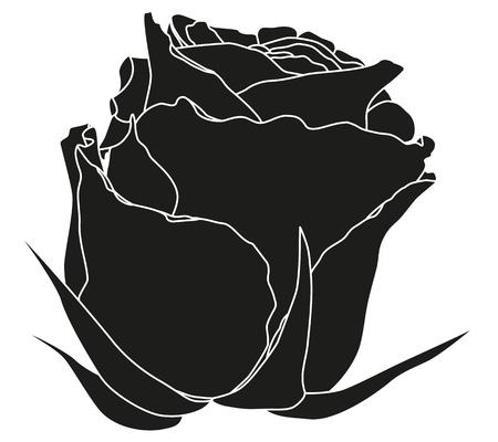 tattoo rose flower, vector illustration Vector