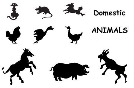 domestic animals silhouettes vector illustration Vector