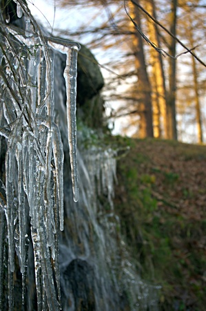 Beautiful icicle in the park Stock Photo - 12240870