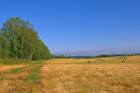 Farmers field full of hay bales near forest Stock Photo - 15311546