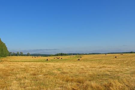 Farmers field full of hay bales Stock Photo - 15311545