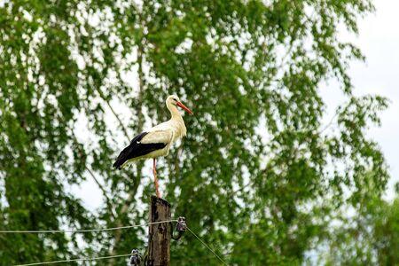 Stork on electric pillar, close-up 스톡 콘텐츠