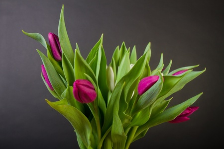 Bouquet of purple tulips over black background photo