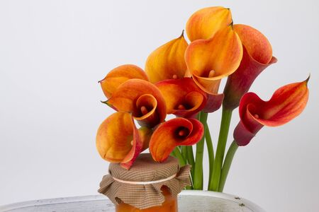 Orange Calla lilies(Zantedeschia) with orange and pumpkin marmalade over white  photo
