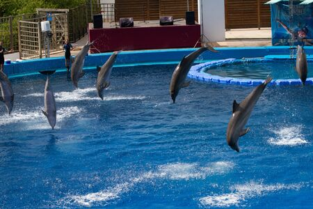 oceanographic: Dolphins show at the Oceanographic in The City of Arts and Sciences on July 28, 2011 in Valencia, Spain