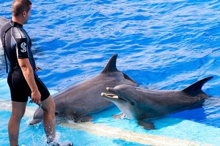 Dolphins' show at the Oceanographic (Valencian: L'Oceanogr�fic, Spanish: El Oceonogr�fico) in The City of Arts and Sciences (Valencian: Ciutat de les Arts i les Ci�ncies, Spanish: Ciudad de las Artes y las Ciencias) on July 28, 2011 in Valencia, Spain Stock Photo - 11828378