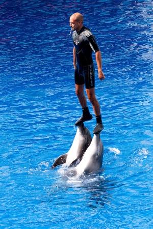 fico: Dolphins show at the Oceanographic (Valencian: LOceanogr�fic, Spanish: El Oceonogr�fico) in The City of Arts and Sciences (Valencian: Ciutat de les Arts i les Ci�ncies, Spanish: Ciudad de las Artes y las Ciencias) on July 28, 2011 in Valencia, Spain