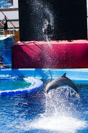 Dolphins' show at the Oceanographic (Valencian: L'Oceanogràfic, Spanish: El Oceonográfico) in The City of Arts and Sciences (Valencian: Ciutat de les Arts i les Ciències, Spanish: Ciudad de las Artes y las Ciencias) on July 28, 2011 in Valencia, Spain Stock Photo - 11829714