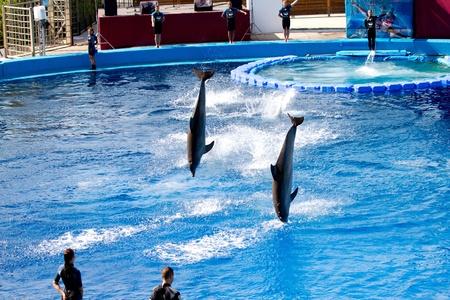 fico: Dolphins show at the Oceanographic (Valencian: LOceanogràfic, Spanish: El Oceonográfico) in The City of Arts and Sciences (Valencian: Ciutat de les Arts i les Ciències, Spanish: Ciudad de las Artes y las Ciencias) on July 28, 2011 in Valencia, Spain