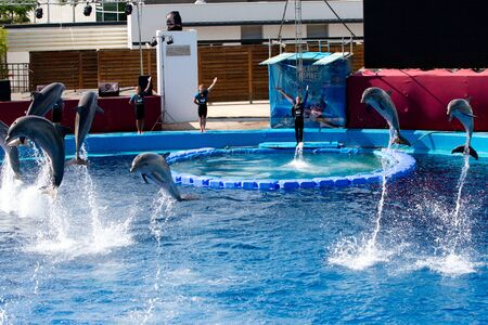 Dolphins' show at the Oceanographic (Valencian: L'Oceanogr�fic, Spanish: El Oceonogr�fico) in The City of Arts and Sciences (Valencian: Ciutat de les Arts i les Ci�ncies, Spanish: Ciudad de las Artes y las Ciencias) on July 28, 2011 in Valencia, Spain Stock Photo - 11829619