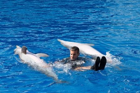 Dolphins' show at the Oceanographic (Valencian: L'Oceanogr�fic, Spanish: El Oceonogr�fico) in The City of Arts and Sciences (Valencian: Ciutat de les Arts i les Ci�ncies, Spanish: Ciudad de las Artes y las Ciencias) on July 28, 2011 in Valencia Stock Photo - 11829698