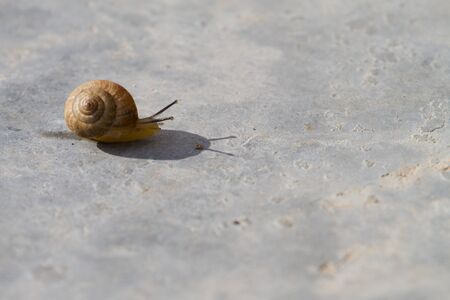 Land Snail with shadow  photo