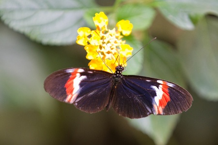Butterfly Closeup photo