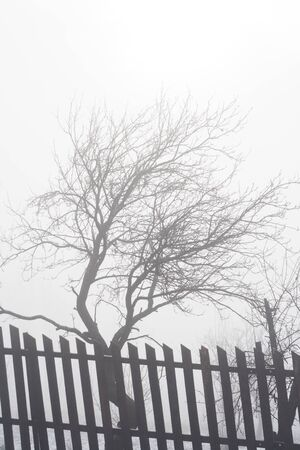 Winter trees in the dense fog photo