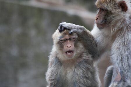 africa kiss: Monkey business