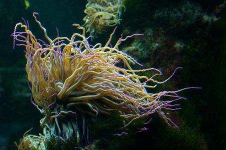 sohal: Underwater view of marine life Stock Photo