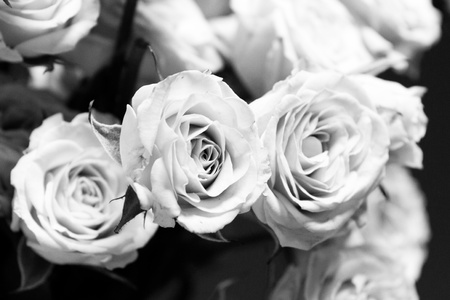 B W photo of a bouquet of pink roses over black background photo