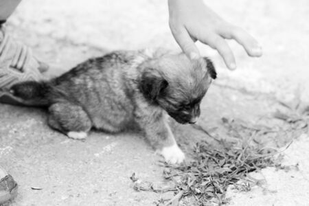 Black and white Brown and white puppy in the grass playing with a child s hand photo