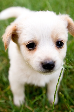funny baby: Brown and white puppy in the grass Stock Photo