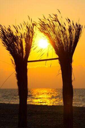 Sunrise through reed in Vadu, Black Sea photo